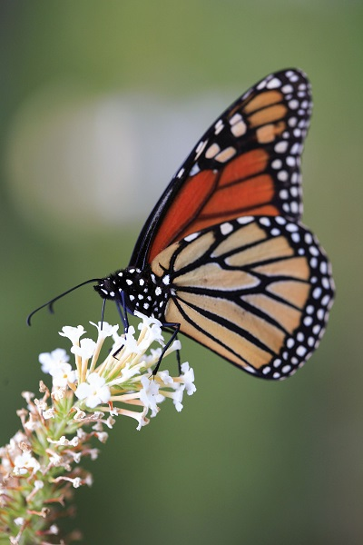 The Butterfly Effect: MTSU Professor Looks Into the Idea