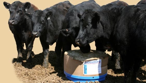 250lb Cow Stress Tubs MISSING? Say what?