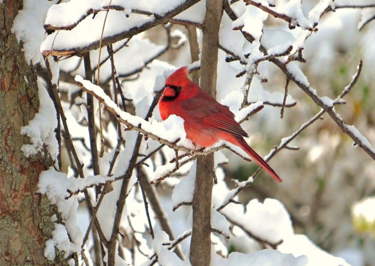 did you know that the us christmas bird counts reported 641 species during last years audubon christmas bird count the 118th annual bird count kicks off - Audubon Christmas Bird Count