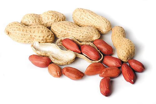 Peanut Allergies: A Hard Nut to Crack