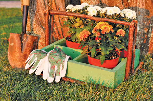 Add annuals, perennials now for color all summer long