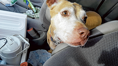Hope was a patient passenger on the 10-hour drive from Virginia back to PAL in Okatie.