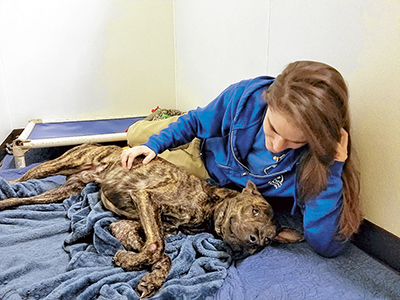 Healing on the horizon for shelter dog with broken legs