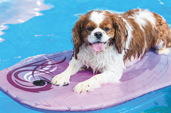 Get wet with your pet during summer dog swim sessions