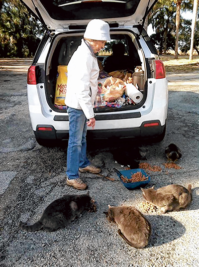 Residents care for many of Lowcountry's forgotten cats