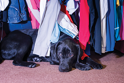 Understand stages of dog's fear to help overcome it