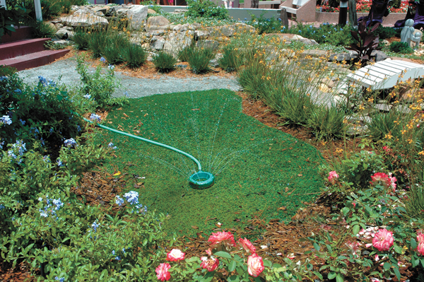 Avoid over-watering, especially late in the day