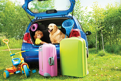 Planning for safe travels with the family pet