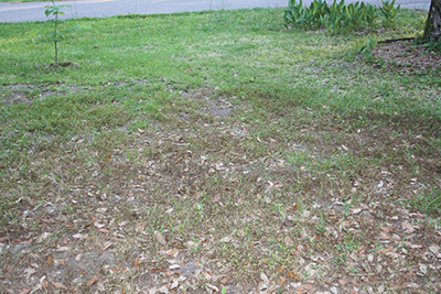 Get back to yard chores when weather dries up
