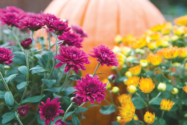 With cooler temps, start on autumn garden chores