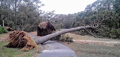 Rose Hill Golf Course was littered with fallen trees, but there was no significant damage to the fairways, greens and tees. PHOTO BY ADAM GERLACH