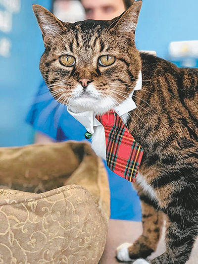 Adopt a homeless pet during the season of second chances