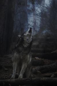 Midnight Howls