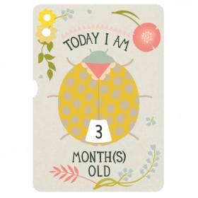 Milestone Baby's First Year Turn Wheel Photo Card