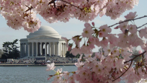 Spring_in_dc-full