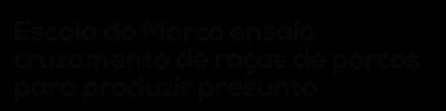 Escola do Marco ensaia cruzamento de raças de porcos para produzir presunto