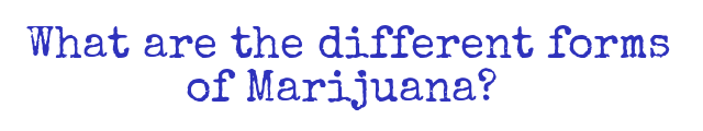 What are the different forms of Marijuana?