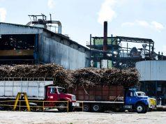 Buscan récord de Molienda de caña de azúcar