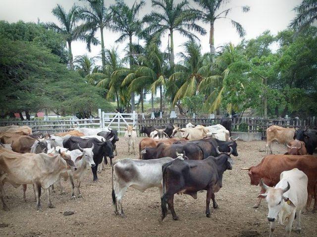 Piden ganaderos reforzar seguridad