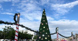 Hoy gran encendido del árbol de navidad