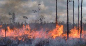 Manglares devastados por incendios y talas