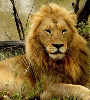 south african animals pictures