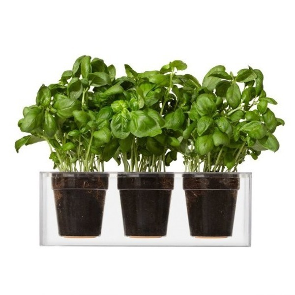 Boskke Cube 3 Small Planters, Clear