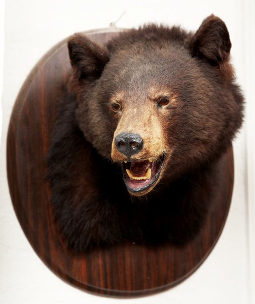 Mounted Brown Bear Head