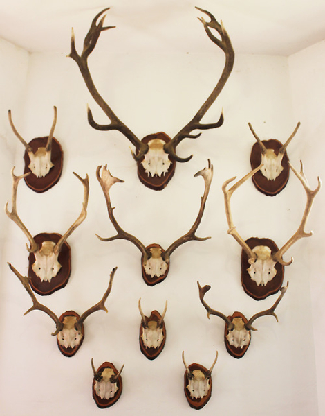 Antlers of Varying Size