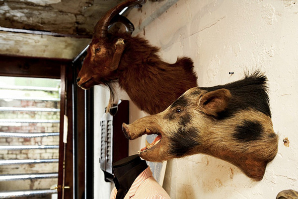 Boar Head Taxidermy in a Rough Basement