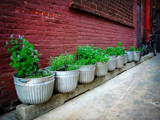 Herb Garden in Raised Metal Buckets