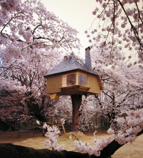 House in a Tree Surrounded by Cherry Blossoms