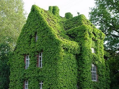 Moss Cover House