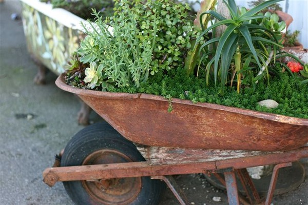 Rusted Wheelbarrow Planter