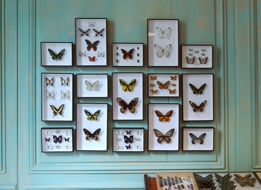 Wall Of Butterflies