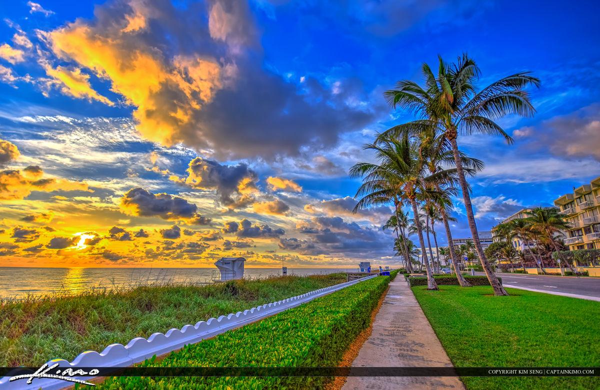 Ocean Sunrise Palm Tree
