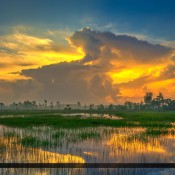 Gorgeous sunrise of Florida wetlands at the Pine Glades Natural Area in Jupiter Florida. HDR image created in Photomatix Pro and Topaz software.