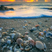 Beauitful sea shells on the beach from Hutchinson Island in Stuart, Florida during sunrise. HDR image from two exposures tone mapped using Photomatix Pro and Topaz software.