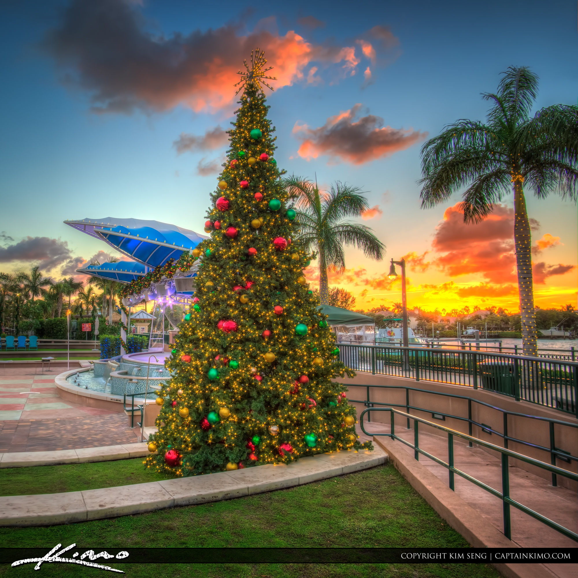 Christmas Tree Harbourside Place Sunset