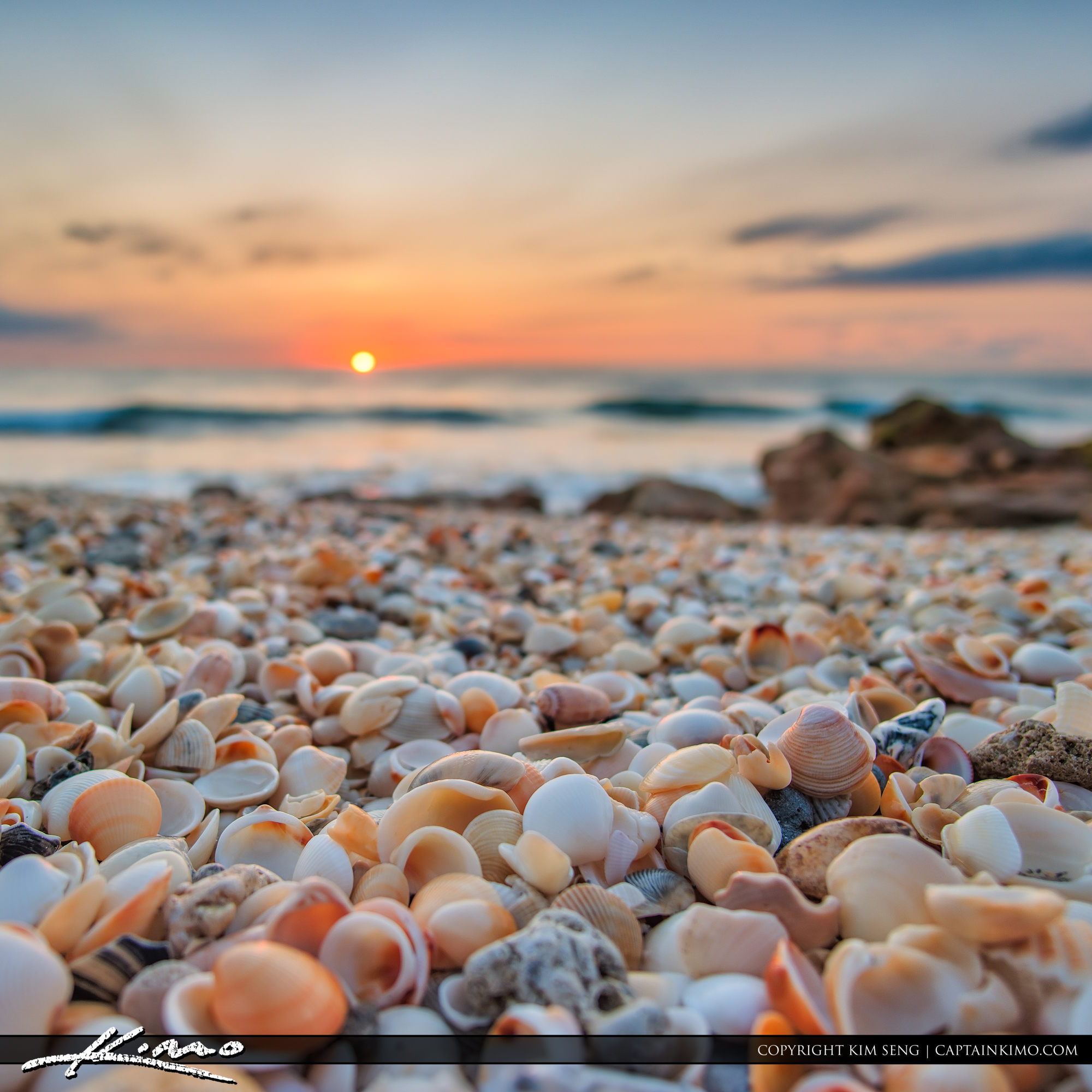 sunrise with shells at beach
