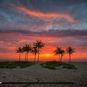 Amazing colors this morning over some coconut palm trees on the beach at Singer Island Florida. HDR image created in EasyHDR software.