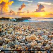 Beauitful warm sunrise at the beach with seashells at Coral Cove Park on Jupiter Island. HDR image created using Aurora HDR software by Macphun.