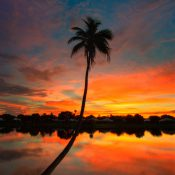 Beautiful coconut tree at sunset in Lake Catherine Florida during sunset over Palm Beach Gardens. HDR image processed using Photomatix Pro.