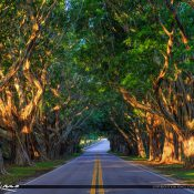 Beautiful Bridge Road in Hobe Sound Florida under the tree covered road in Martin County to Jupiter Island. HDR image created using EasyHDR software and Aurora.