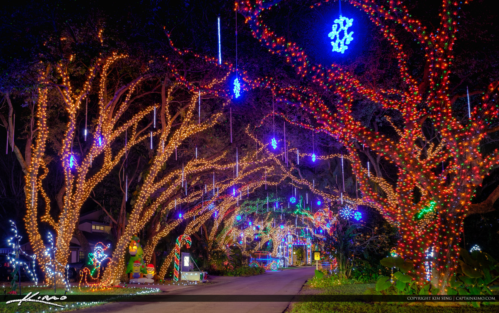 christmas lights palm beach gardens lights on oak tree - Palm Tree With Christmas Lights