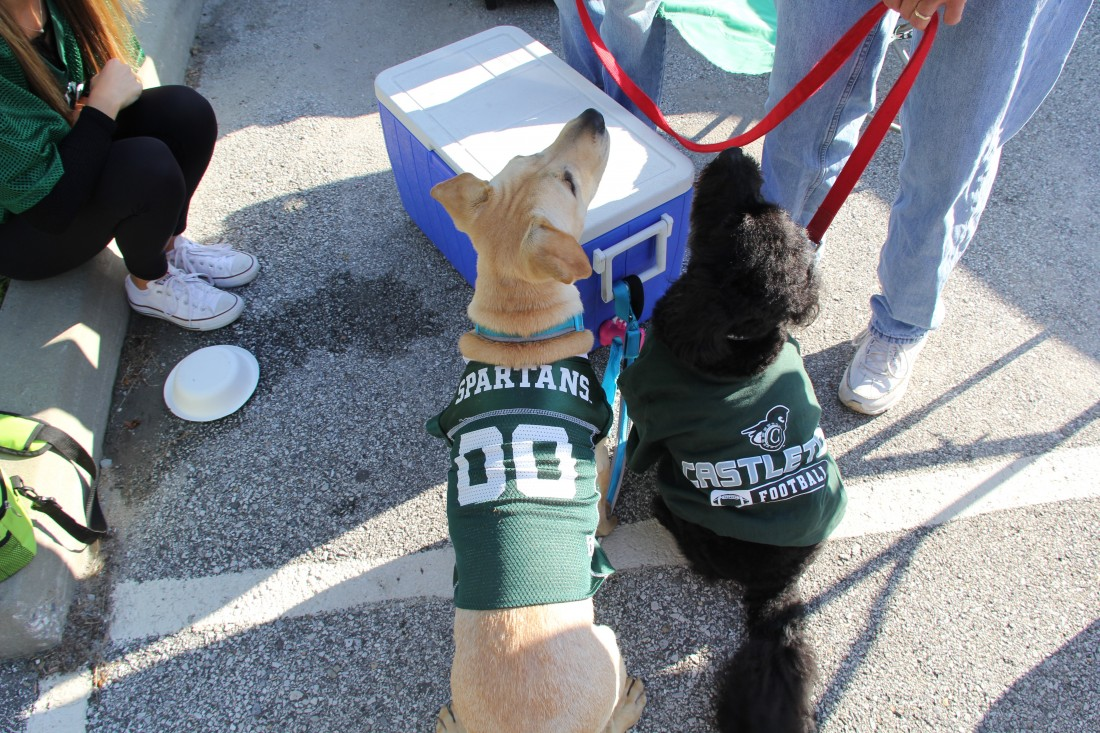 A couple of dogs enjoying Homecoming & Family Weekend.