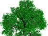 Immagine albero