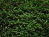 Blocchi Cad: texture pianta