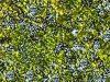 Blocchi Cad: texture verde