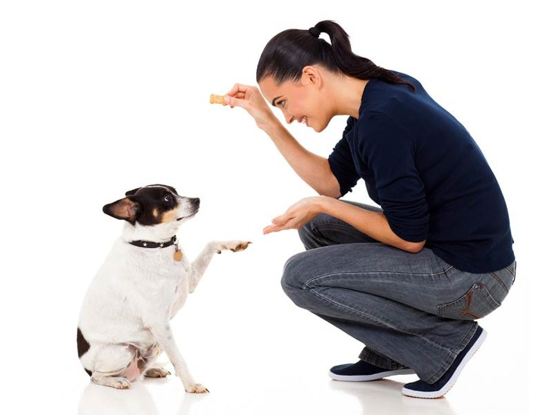 13 Tips From the Top Dog Trainers